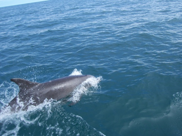 erste Delfine