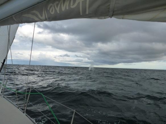 Fontäne des Finnwals