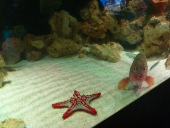 120924_Aquarium