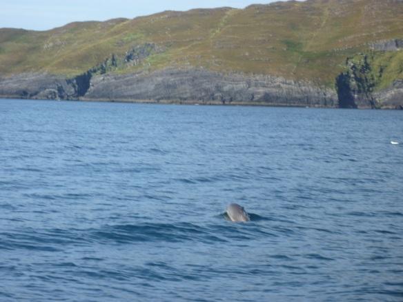 Baltimore Delfine