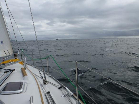 Fastnet und Delfin