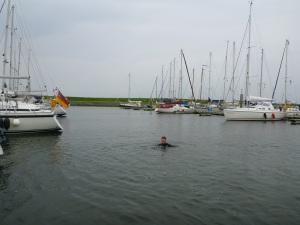 Schwimmen im Hafen von Texel