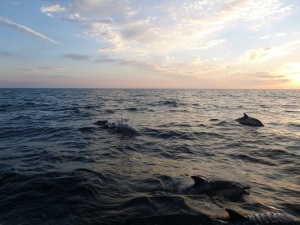 dolphins naeher