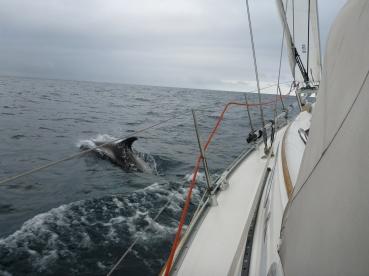150713_Dolphin1